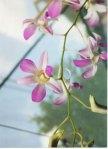 Tita's Orchids