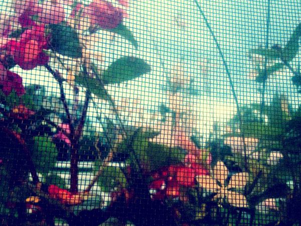 Summer1_web
